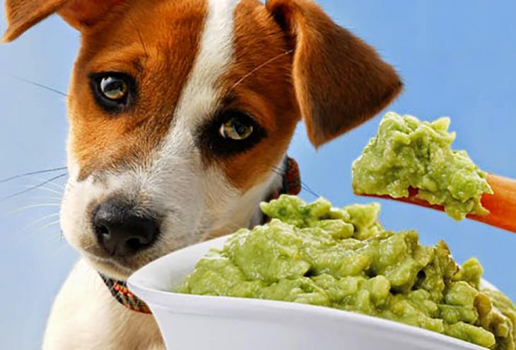 Foods dogs can't eat