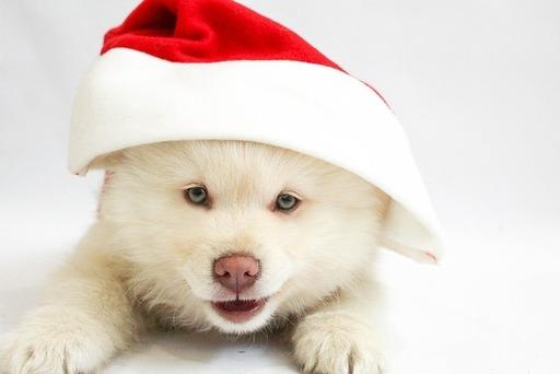Merry Little Dog